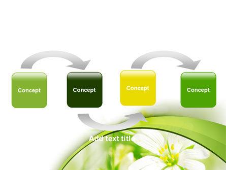 Spring Bloom PowerPoint Template, Slide 4, 07764, Nature & Environment — PoweredTemplate.com