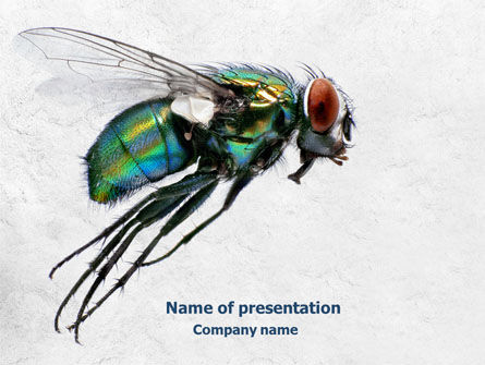 General: Fly PowerPoint Template #07968
