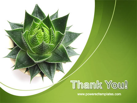 Aloe Plant PowerPoint Template Slide 20