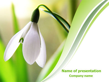 First Snowdrop PowerPoint Template, 08093, Nature & Environment — PoweredTemplate.com