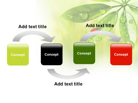 Ladybird on Leaf PowerPoint Template, Slide 4, 08195, Nature & Environment — PoweredTemplate.com