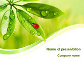 Nature & Environment: Ladybird on Leaf PowerPoint Template #08195