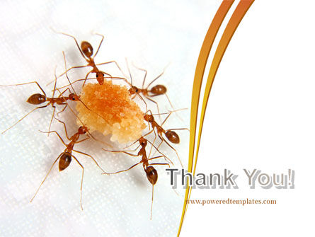 Ants Team Work PowerPoint Template Slide 20