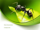 Education & Training: Ant PowerPoint Template #08356