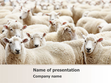 Agriculture: Sheep Flock PowerPoint Template #08443
