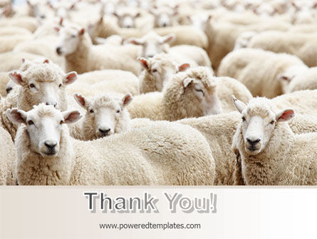 Sheep Flock PowerPoint Template Slide 20