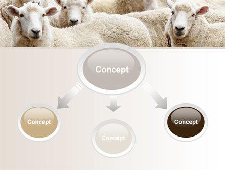 Sheep Flock PowerPoint Template, Slide 4, 08443, Agriculture — PoweredTemplate.com