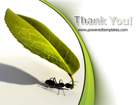 Spring Ant PowerPoint Template Slide 20