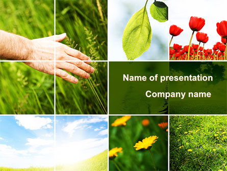 Wildflowers PowerPoint Template, 08697, Nature & Environment — PoweredTemplate.com