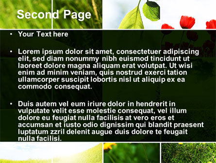 Wildflowers PowerPoint Template, Slide 2, 08697, Nature & Environment — PoweredTemplate.com