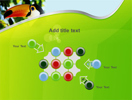 Southern Mexico Toucan PowerPoint Template Slide 10