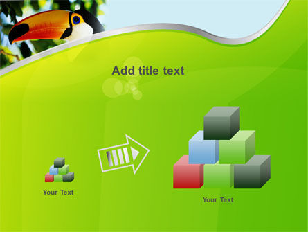 Southern Mexico Toucan PowerPoint Template Slide 13