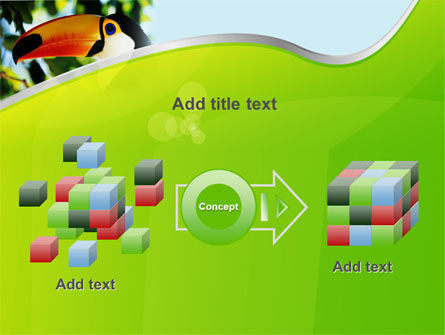 Southern Mexico Toucan PowerPoint Template Slide 17