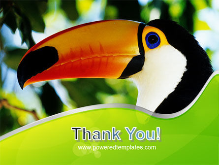 Southern Mexico Toucan PowerPoint Template Slide 20