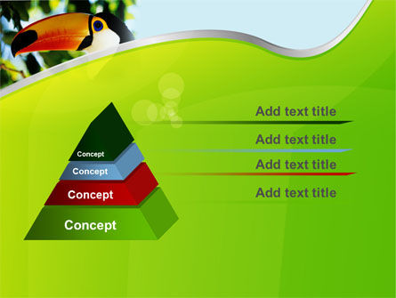 Southern Mexico Toucan PowerPoint Template, Slide 4, 08813, Animals and Pets — PoweredTemplate.com