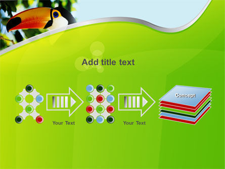 Southern Mexico Toucan PowerPoint Template Slide 9
