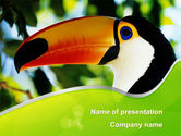 Animals and Pets: Templat PowerPoint Meksiko Selatan Toucan #08813
