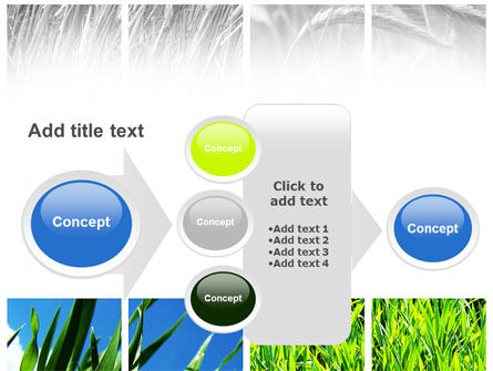 Wheats PowerPoint Template Slide 17