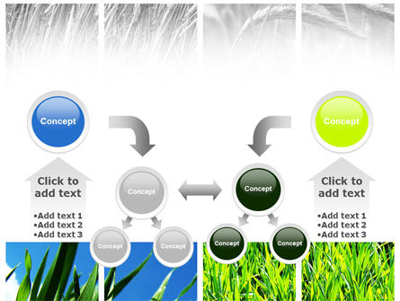Wheats PowerPoint Template Slide 19