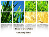 Agriculture: Wheats PowerPoint Template #08821