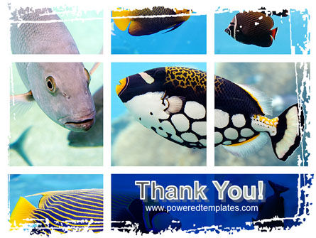 Tropical Fish Collage PowerPoint Template Slide 20