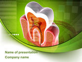 Medical: Tooth In Section PowerPoint Template #08956