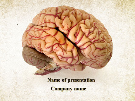 Medical: Human Brain As Anatomical Preparation PowerPoint Template #09280