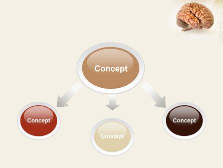 Human Brain As Anatomical Preparation PowerPoint Template, Slide 4, 09280, Medical — PoweredTemplate.com