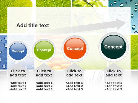 Wet Green Leaf PowerPoint Template Slide 13