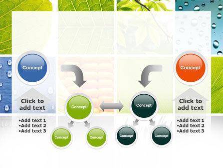 Wet Green Leaf PowerPoint Template Slide 19