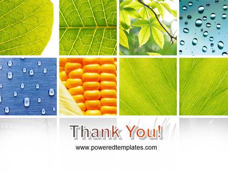 Wet Green Leaf PowerPoint Template Slide 20