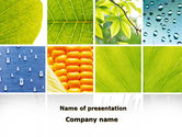 Agriculture: Wet Green Leaf PowerPoint Template #09414