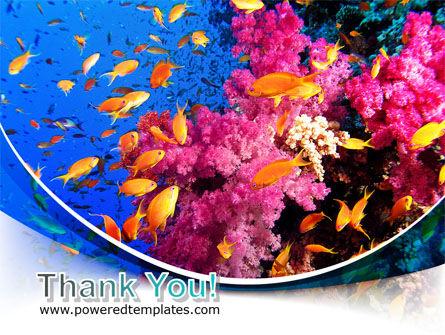 Coral Reef Fishing PowerPoint Template Slide 20