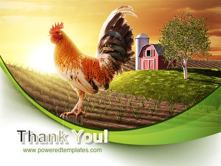 Morning At The Farm PowerPoint Template Slide 20