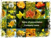 Nature & Environment: 파워포인트 템플릿 - 꽃 콜라주 #09702