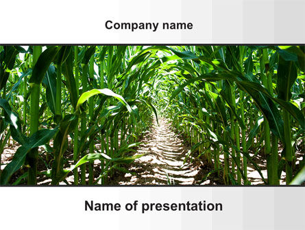 Corn Field PowerPoint Template, 09838, Agriculture — PoweredTemplate.com