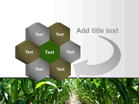 Corn Field PowerPoint Template Slide 11