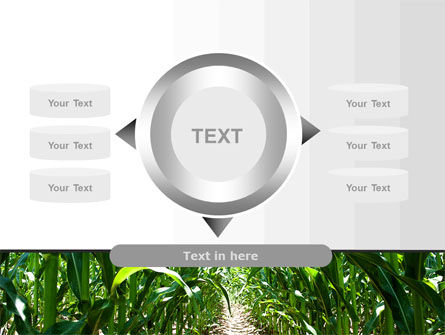 Corn Field PowerPoint Template Slide 12