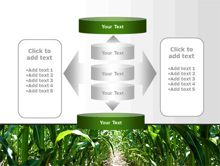 Corn Field PowerPoint Template Slide 13