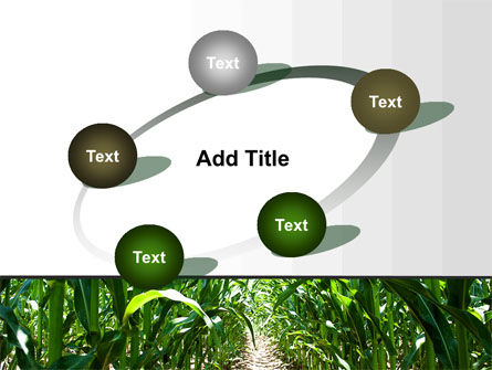 Corn Field PowerPoint Template Slide 14