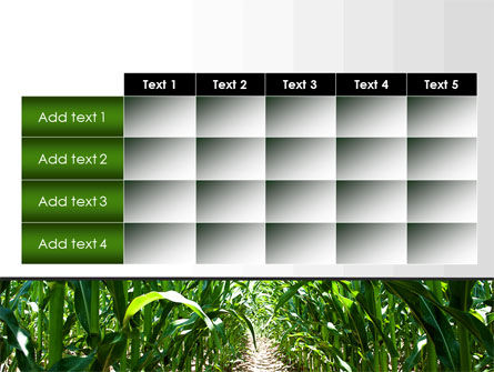 Corn Field PowerPoint Template Slide 15