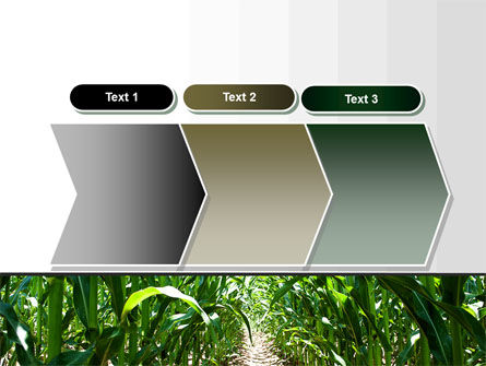 Corn Field PowerPoint Template Slide 16