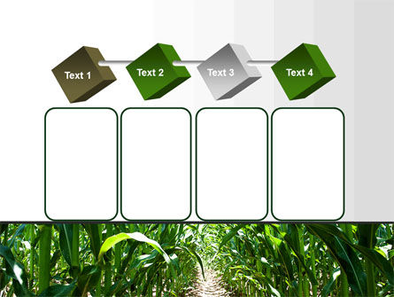 Corn Field PowerPoint Template Slide 18