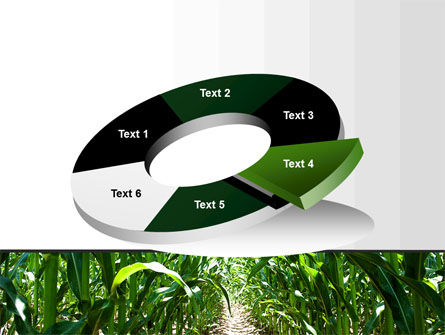 Corn Field PowerPoint Template Slide 19