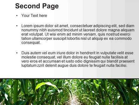 Corn Field PowerPoint Template, Slide 2, 09838, Agriculture — PoweredTemplate.com