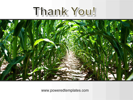 Corn Field PowerPoint Template Slide 20