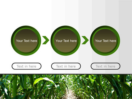 Corn Field PowerPoint Template Slide 5