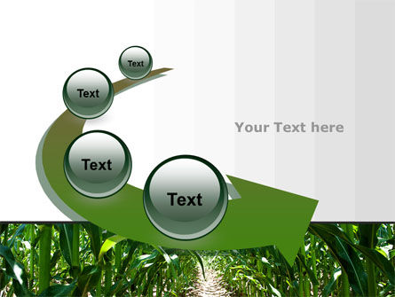 Corn Field PowerPoint Template Slide 6