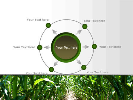 Corn Field PowerPoint Template Slide 7