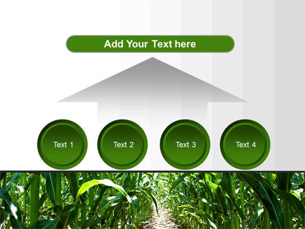 Corn Field PowerPoint Template Slide 8